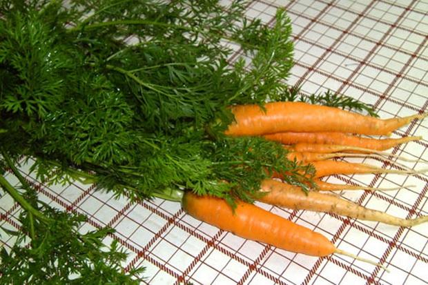 Сорт моркови: Принцесса
