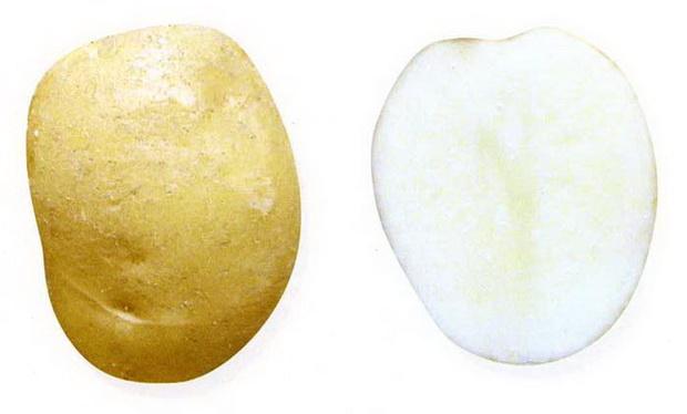 Сорт картофеля: Принц