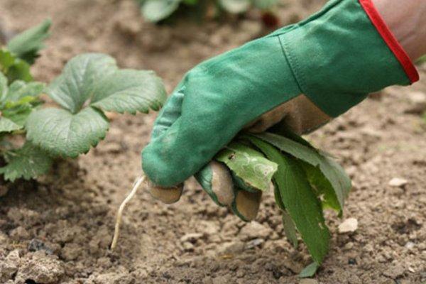 Профилактические методы борьбы с сорняками