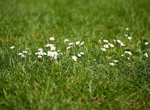 Провокация семян к прорастанию