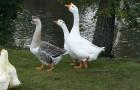 Птицы усадьбы Мон-Блан