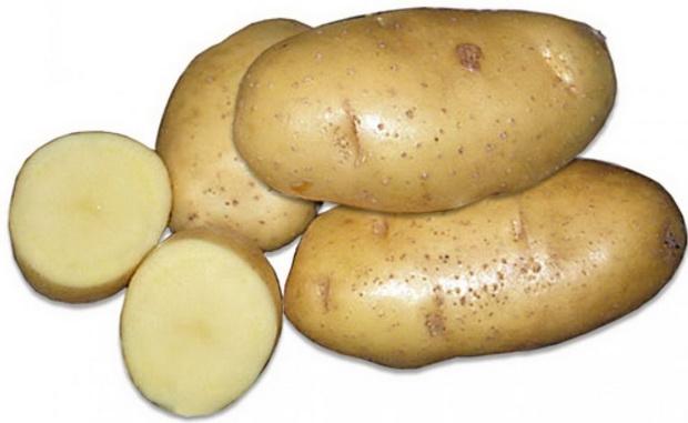 Сорт картофеля: Рагнеда