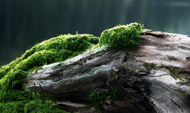 Растения-зомби могут восстать из мертвых