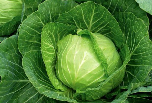 Сорт капусты белокочанной: Разносол   f1