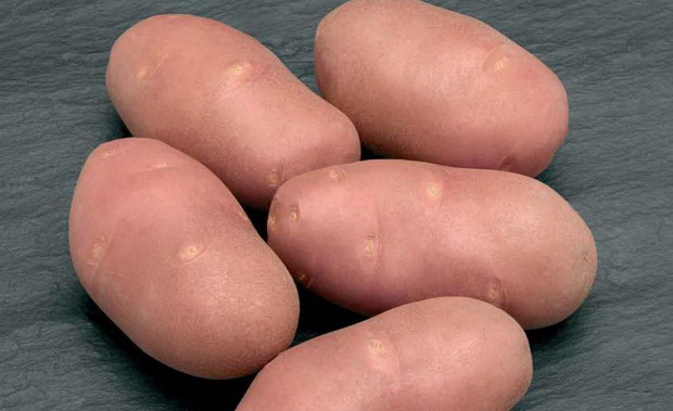 Сорт картофеля: Ред анна