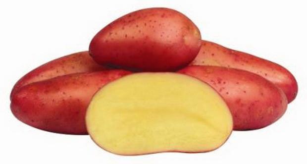 Сорт картофеля: Ред фэнтази