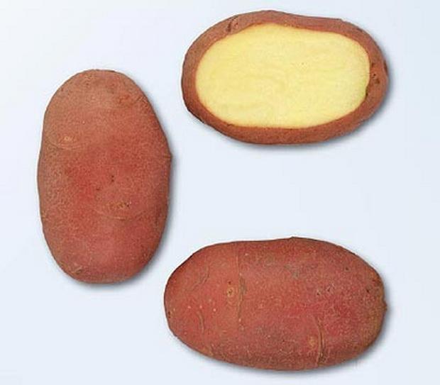 Сорт картофеля: Ред скарлетт