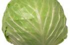 Сорт капусты белокочанной: Реванш f1