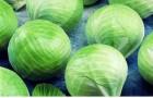 Сорт капусты белокочанной: Риэкшен f1