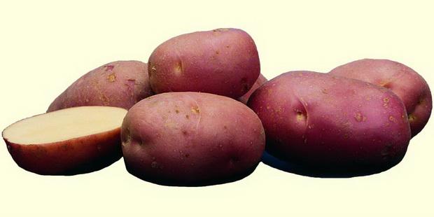 Сорт картофеля: Роко