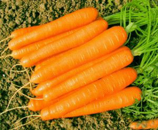 Сорт моркови: Романс   f1