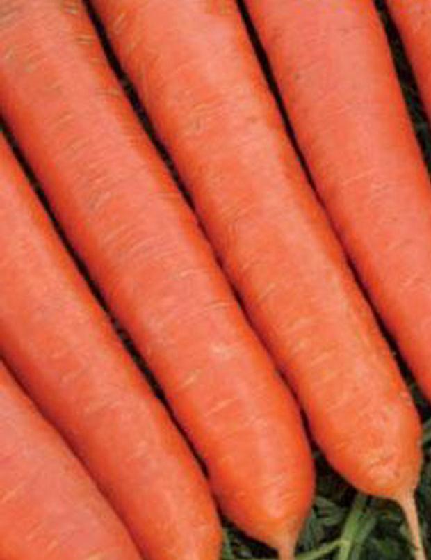 Сорт моркови: Ромоса