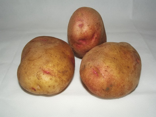 Сорт картофеля: Россиянка