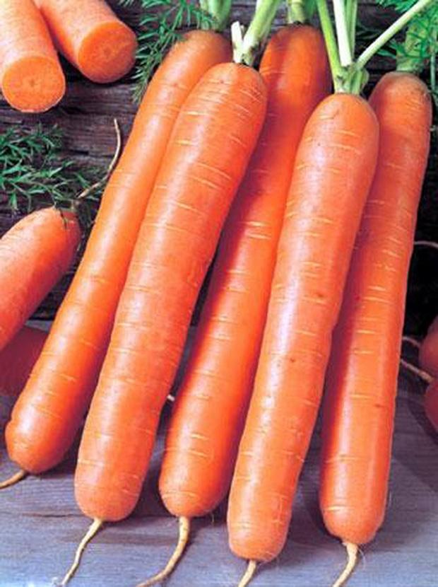Сорт моркови: Ройал форто