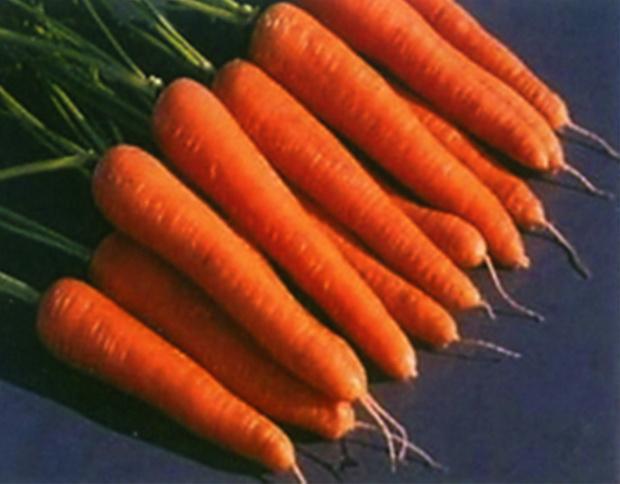 Сорт моркови: Розаль