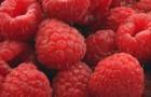 Сорт малины: Рубин брянский