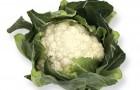 Сорт капусты цветной: Шамборд f1