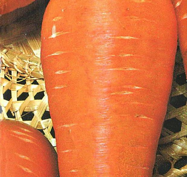 Сорт моркови: Шантенэ королевская