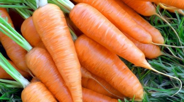 Сорт моркови: Шантино