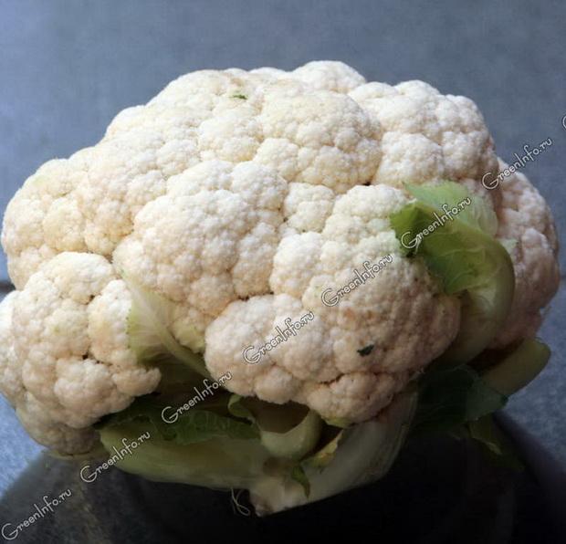 Сорт капусты цветной: Сахарная глазурь