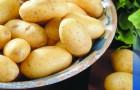 Сорт картофеля: Салин