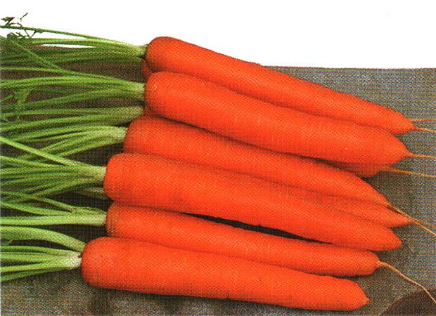 Сорт моркови: Саманта   f1
