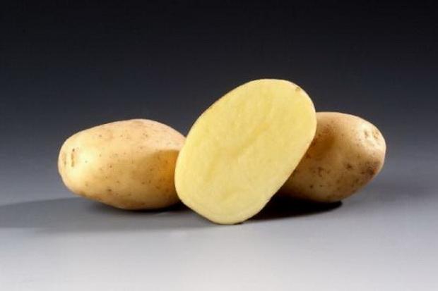 Сорт картофеля: Сантана