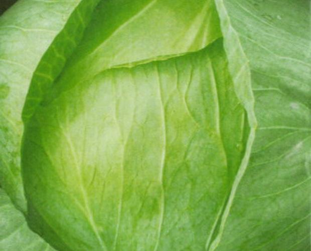 Сорт капусты белокочанной: Сб 3   f1