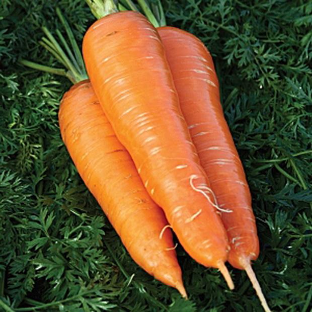 Сорт моркови: Селянка