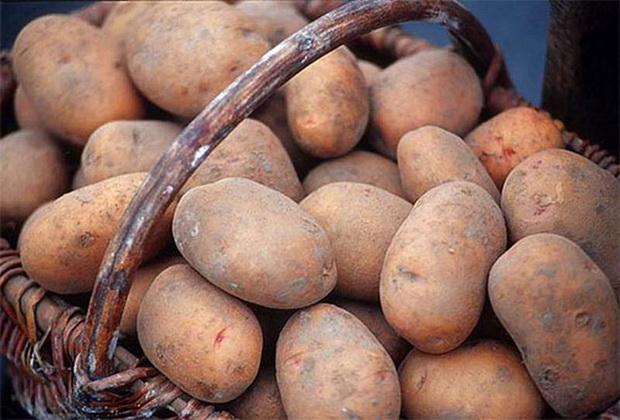 Сорт картофеля: Сентябрь