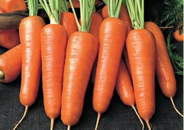 Сорт моркови: Сентябрина