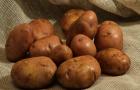 Сорт картофеля: Серпанок