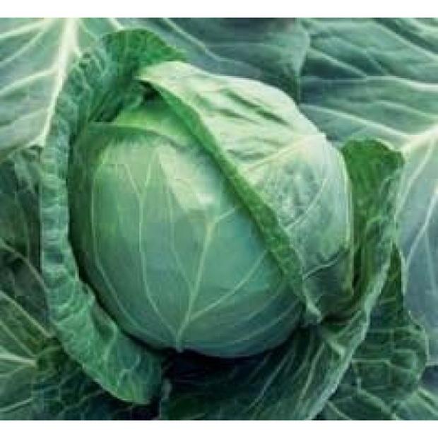 Сорт капусты белокочанной: Силема рз   f1