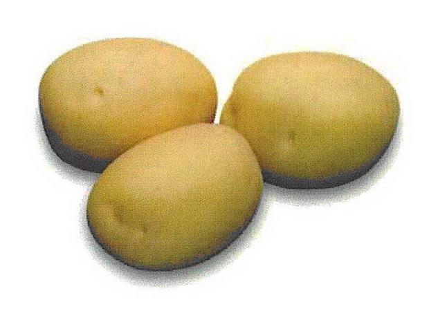 Сорт картофеля: Сильвана
