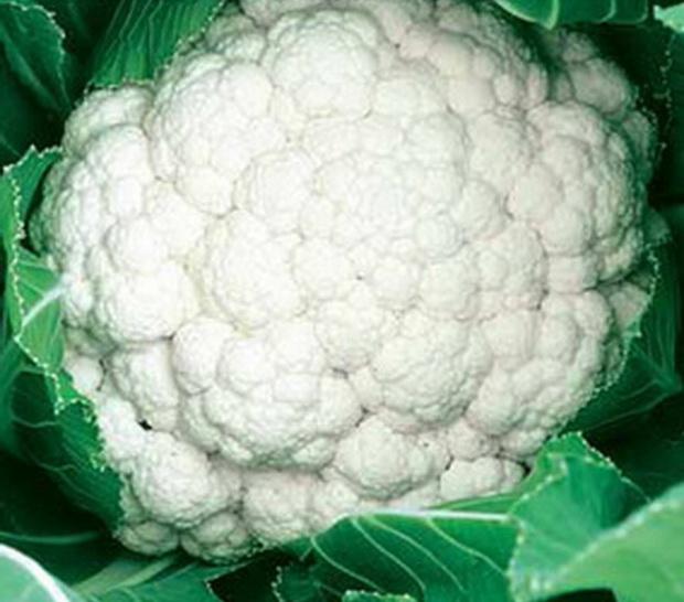 Сорт капусты цветной: Синерджи   f1
