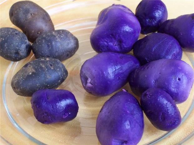 Сорт картофеля: Сиреневый туман
