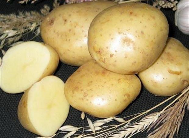 Сорт картофеля: Скороплодный