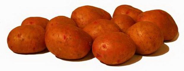 Сорт картофеля: Снегирь