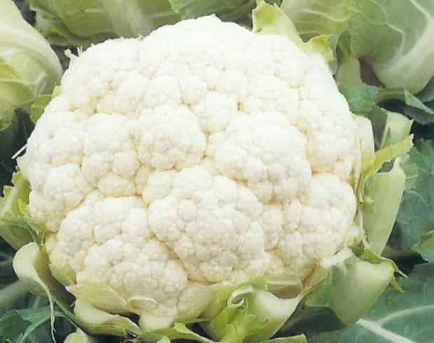 Сорт капусты цветной: Снегурочка   f1