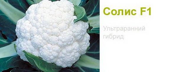 Сорт капусты цветной: Солис   f1