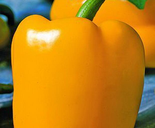 Сорт перца сладкого: Солнечный зайчик