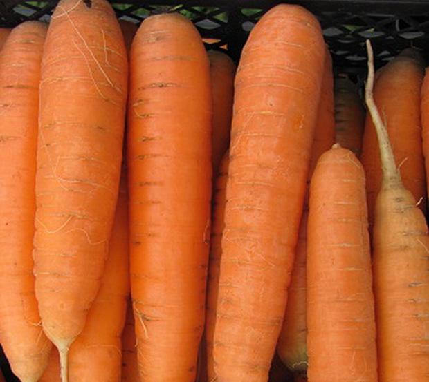 Сорт моркови: Соната