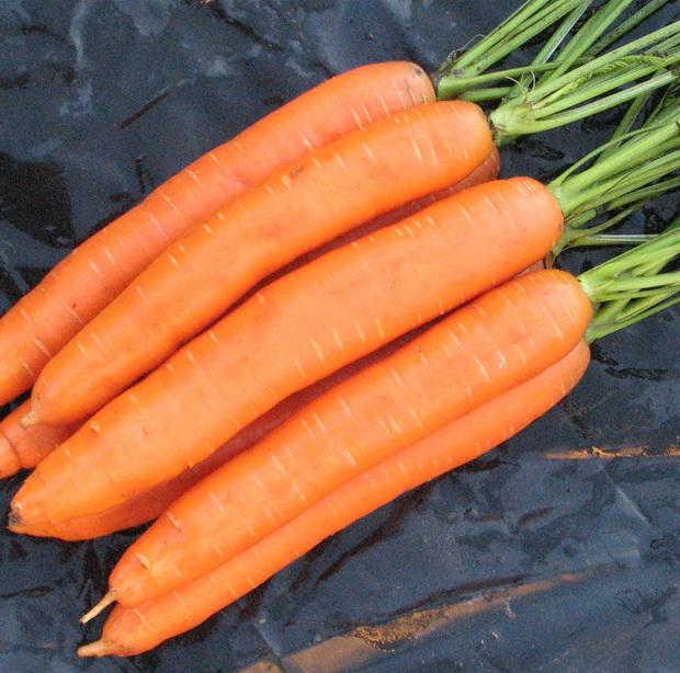 Сорт моркови: Сопрано   f1