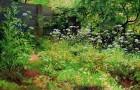 Сорняк — сныть обыкновенная