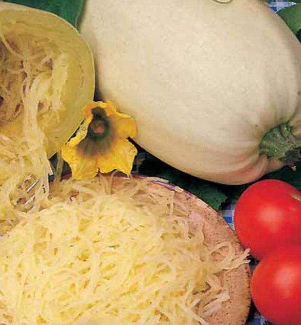 Сорт кабачка: Спагетти фемели