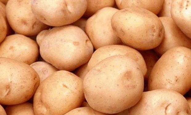 Сорт картофеля: Спарта