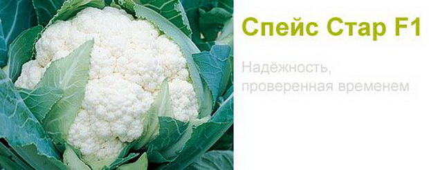 Сорт капусты цветной: Спейс стар   f1