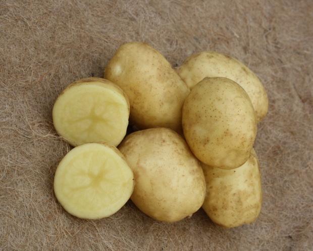 Сорт картофеля: Спринт