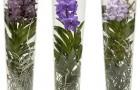 Стекляная ваза с орхидеями
