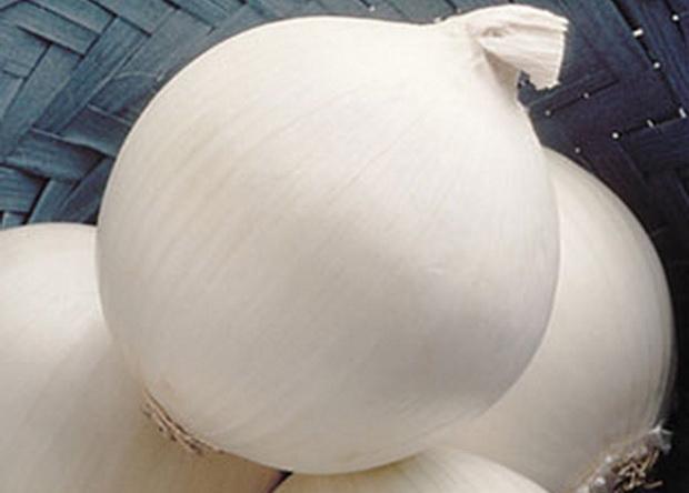 Сорт лука репчатого: Стерлинг   f1